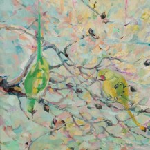 Parakeets in an Almond Tree