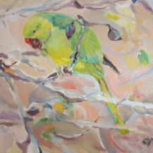 Parakeet in Almond Tree