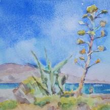 Century Plant, Kissamos Bay